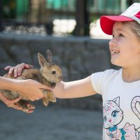 кролик :: Solomko Karina