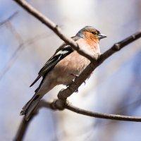 Птица :: Daria Bozakina