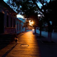 Раннее утро :: Tata Homenko