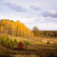 Осенний этюд... :: Александр Никитинский
