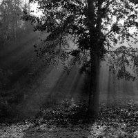 туман :: Анна Кухар