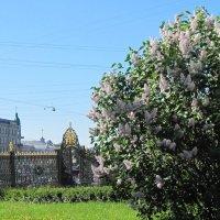 Май в городе :: Маера Урусова