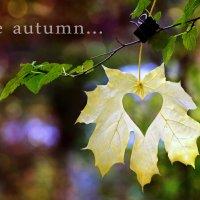 The autumn :: Оксана Акиньшина