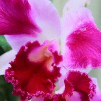 Парк орхидей :: Татьяна Пустовалова