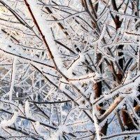 зима :: Александр Швыркунов