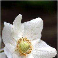 Цветок #2 :: Евгений Кочуров