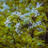 цветение :: Анастасия Иванова