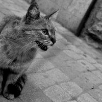 Meow... :: Сергей Крестапович