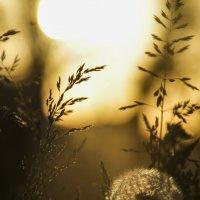 В вечер такой золотистый и ясный.. :: Мария Ставицкая