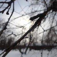 зимнее утро :: Марика Павлиди
