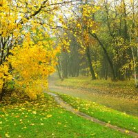 Осенний парк :: Владимир Орлов