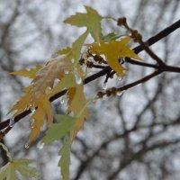 Ледяной дождь :: Vera Erchinskaya