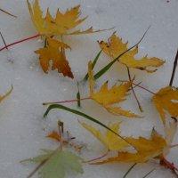 Первый снег :: Vera Erchinskaya