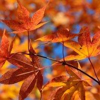 Осень в разгаре :: Елена Боржковская