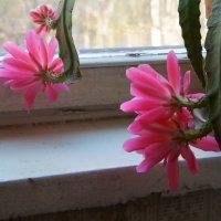 Первомайские цветы :: Яков Реймер