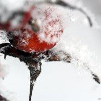 Снежинки. :: Анна Тихомирова
