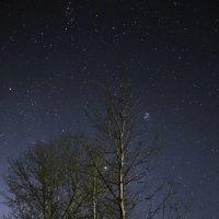 Дерево на фоне звезд :: Олег Волков