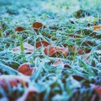 Холодное утро :: Сергей Дубков