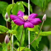 цветок :: Алена Атяшкина
