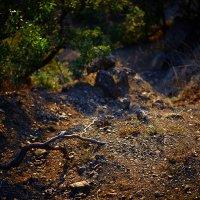 Тропка в горах :: Daria Bundina