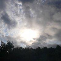 Утро на берегу Обского водохранилища :: Мария Косторева (Орлова)