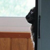 Кошки :: Olga Rouz