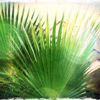 пальмы... :: Оксана Лебедь