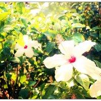 цветы... :: Оксана Лебедь