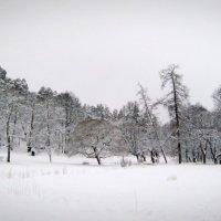 молчание :: Елена Соловьева