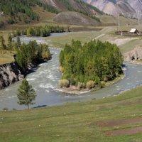 Алтайские реки :: Наталия Краснова
