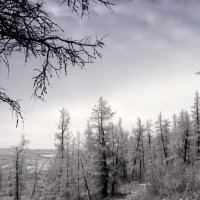 Первый снег :: Pavel Sidorenko
