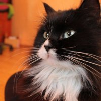 Люсьен) Не судите строго, кошка лежала прямо на животе... :: Remian Mad