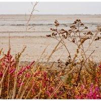 Песчаные кораллы :: Ольга Скопец