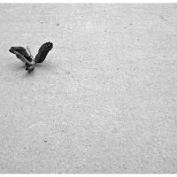 Птица Осень :: Ольга Скопец