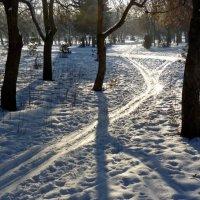 Лыжня в парке :: Александр Садовский