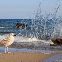 Фонтан для чайки :: Виктор Марченко