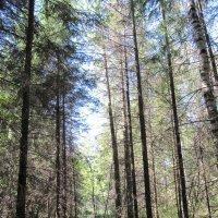 Лесной пейзаж. :: Виктория Чурилова