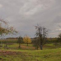 apple-tree :: Александр Голубев