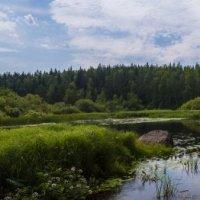 forest Lake :: Александр Голубев