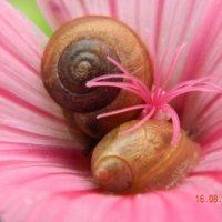 улитки на цветке :: Мария Шумаева