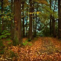 Осень.. :: Максим Мухин