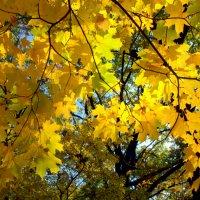 Вот и осень... :: Anatoley Lunov