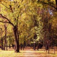 Золотая осень :: Ирина Фёдорова