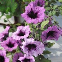 цветы... :: Olga Zinkova