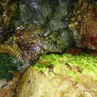 Крабики на камнях :: Liudmila Baryba