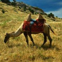 В пустыне, средь барханов и пыли, верблюд спокоен в солнечной дали. :: Ольга Кирилюк