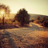 Кипр, по дороге в Пафос :: Елена Защитина