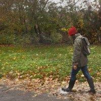 Осень шагает :: Валентина Писаревская