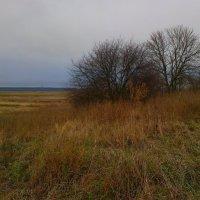 осенний пейзаж :: Юлия Денискина