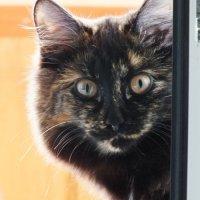 моя кошка Муся :: Olga Rouz